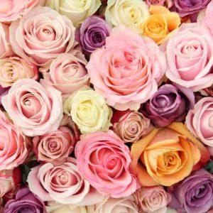 Róża na ślub i wesele - miłość, wierność, czystość, pożądanie, duma, pamięć