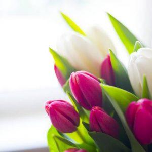 Tulipan na ślub i wesele - zgoda, porozumienie